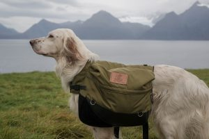 service dog backpacking tasks