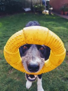 sanitize dog toys